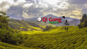 Image Qi Gong Nature sur Youtube